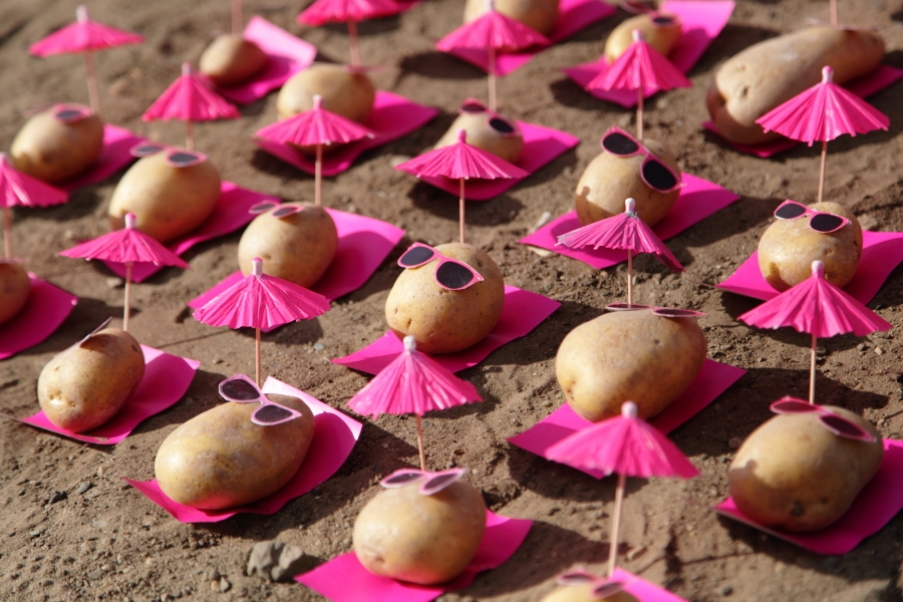 可爱的小土豆 6