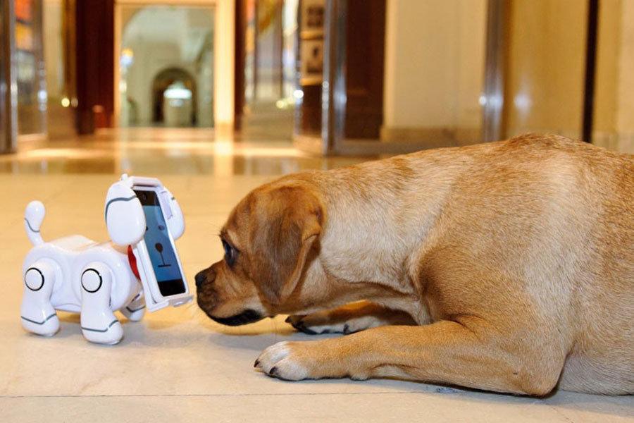 2012年十大有趣的发明:电子狗